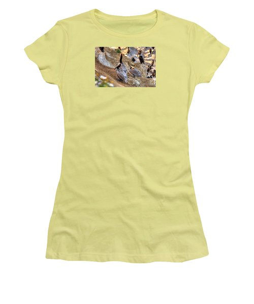 Women's T-Shirt (Junior Cut) featuring the photograph Brown Pelicans At Rest by Jim Carrell