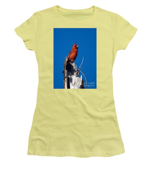 Cardinal On Honeymoon Island Women's T-Shirt (Athletic Fit)
