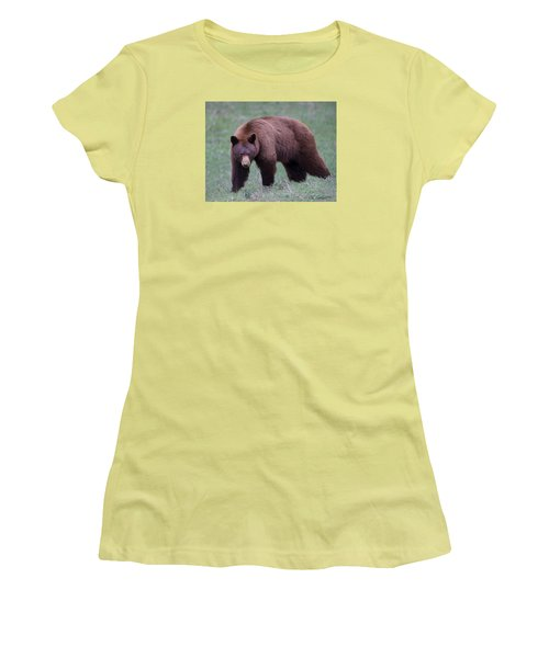 Cinnamon Black Bear Women's T-Shirt (Junior Cut) by CR  Courson