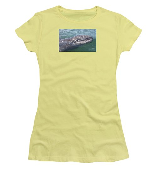 Gray / Grey Whale Eschrichtius Robustus Women's T-Shirt (Athletic Fit)
