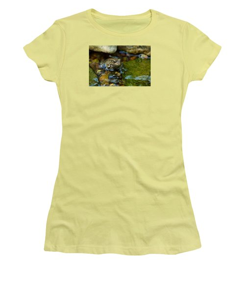 Women's T-Shirt (Junior Cut) featuring the photograph Is There A Prince In There? - Frog On Rocks by Jane Eleanor Nicholas