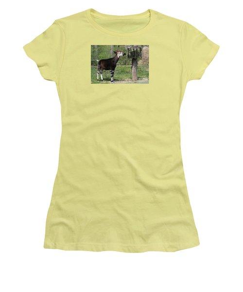 Okapi Women's T-Shirt (Junior Cut) by Judy Whitton