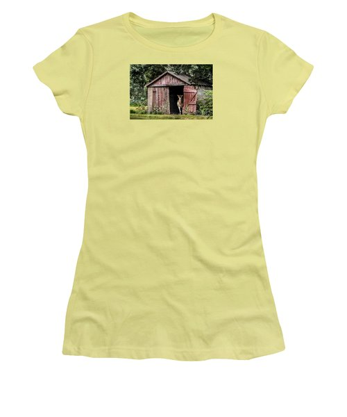 Old Gray Mare Women's T-Shirt (Junior Cut) by Debbie Green