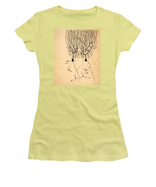 Purkinje Cells By Cajal 1899 Women's T-Shirt (Junior Cut) by Science Source