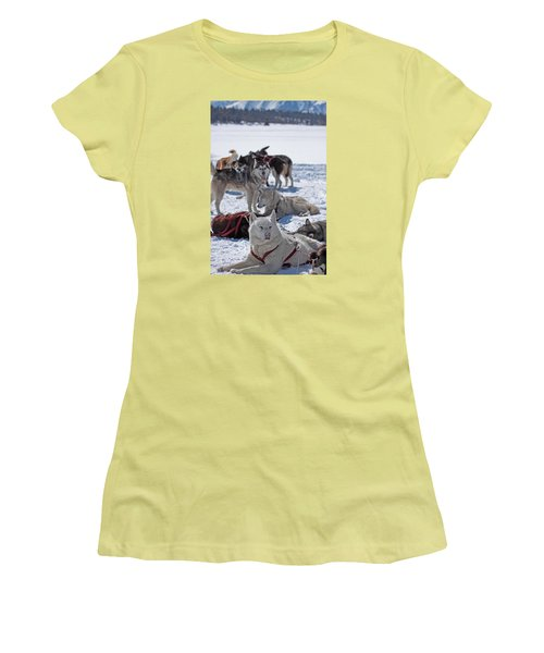 Women's T-Shirt (Junior Cut) featuring the photograph Sled Dogs by Duncan Selby