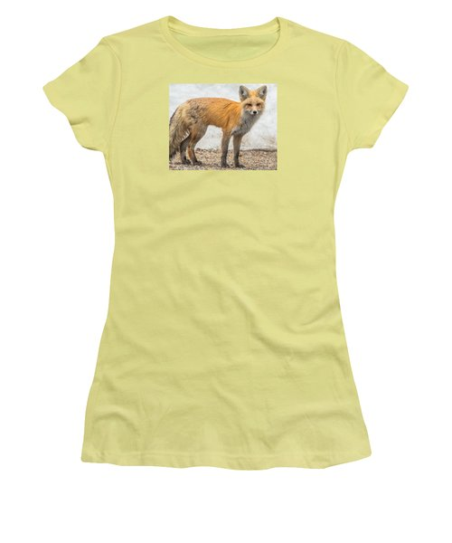 Smart Like A Fox Women's T-Shirt (Junior Cut) by Yeates Photography