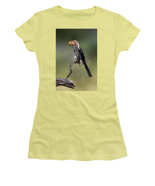 Southern Yellowbilled Hornbill Women's T-Shirt (Athletic Fit)
