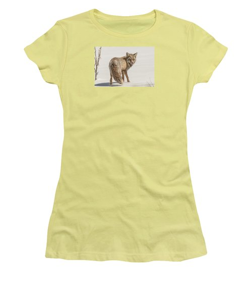The Hungry Fox Women's T-Shirt (Junior Cut) by Yeates Photography