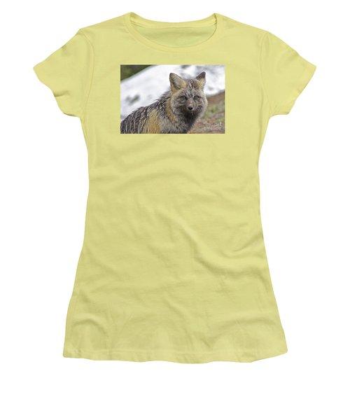 Women's T-Shirt (Junior Cut) featuring the photograph Cascade Red Fox by Sean Griffin