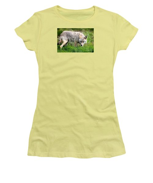 Women's T-Shirt (Junior Cut) featuring the photograph Coyote On The Prowl by Kathy  White