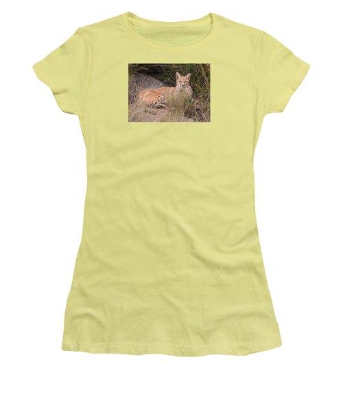 Bobcat At Rest Women's T-Shirt (Junior Cut) by Alan Toepfer