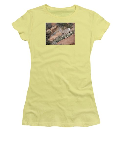 Big Horn Sheep Women's T-Shirt (Junior Cut) by Tyson and Kathy Smith