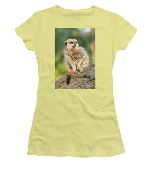 Meerkat Women's T-Shirt (Junior Cut) by Craig Dingle