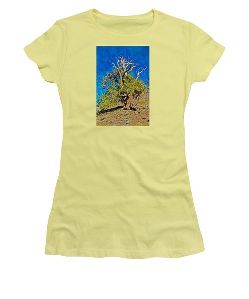 Ancient Bristlecone Pine Women's T-Shirt (Athletic Fit)
