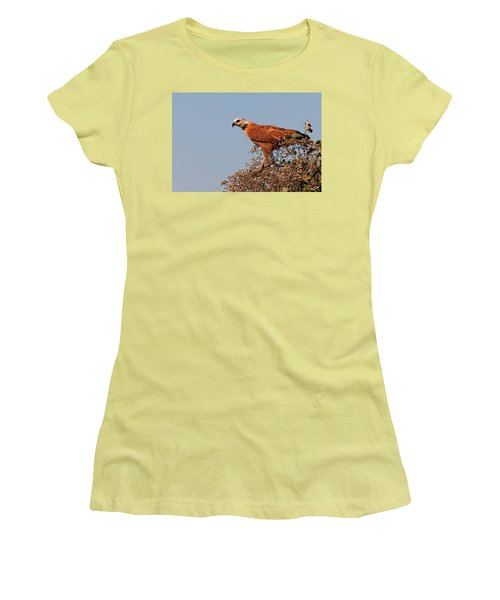 Black-collared Hawk, Pantanal Women's T-Shirt (Junior Cut) by Aivar Mikko