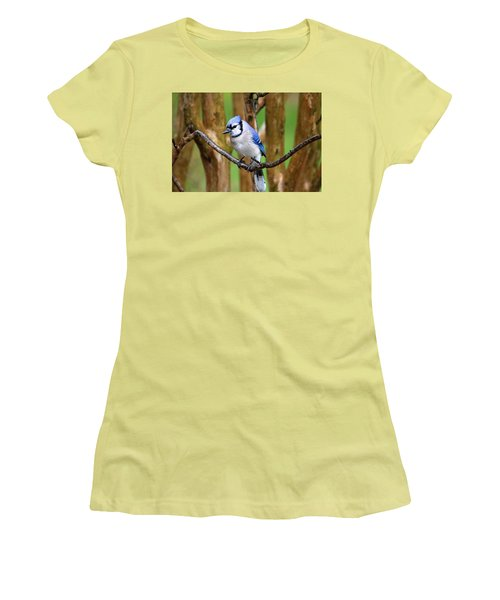 Blue Jay On A Branch Women's T-Shirt (Junior Cut) by Trina Ansel