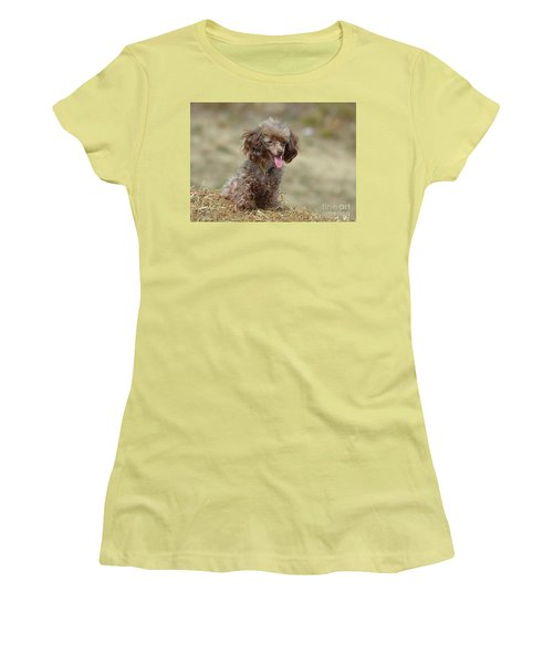 Brown Toy Poodle On Bail Of Hay Women's T-Shirt (Athletic Fit)