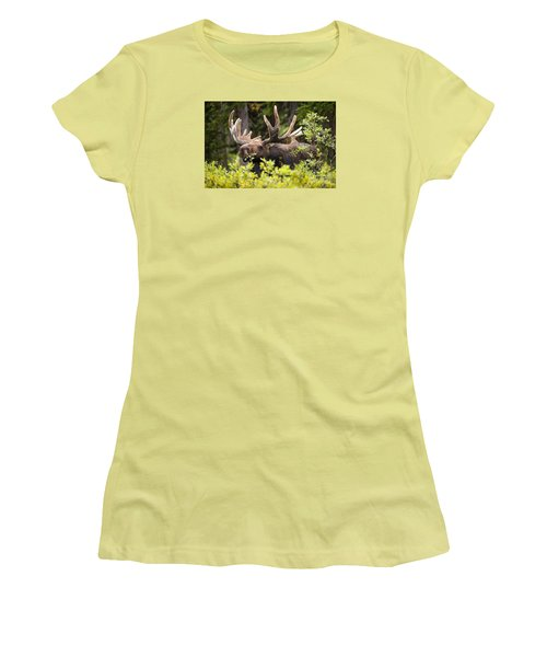 Women's T-Shirt (Junior Cut) featuring the photograph Browser by Aaron Whittemore
