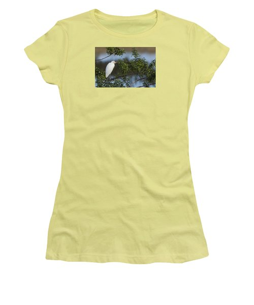 Cattle Egret In The Morning Light Women's T-Shirt (Athletic Fit)