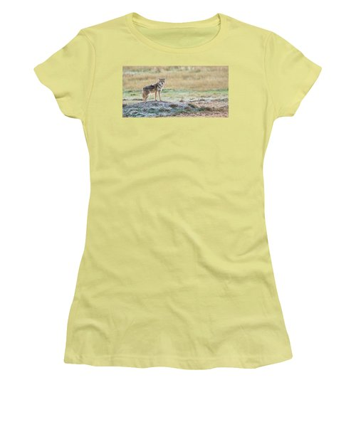 Women's T-Shirt (Junior Cut) featuring the photograph Coyotee by Kelly Marquardt