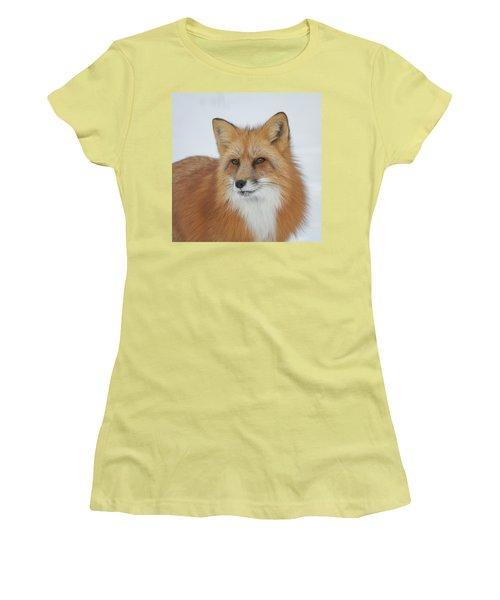 Curious Fox Women's T-Shirt (Athletic Fit)