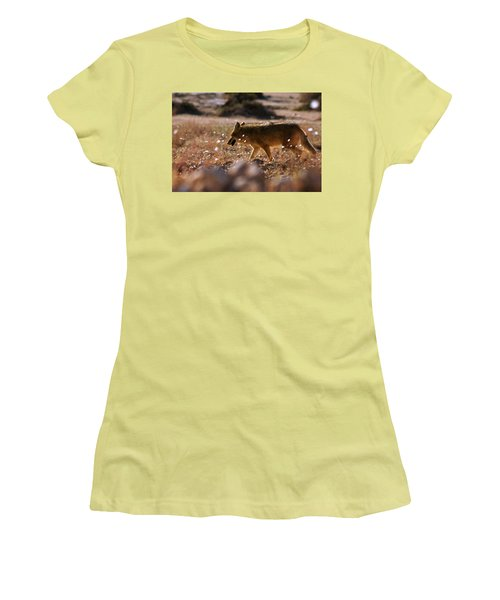 Women's T-Shirt (Junior Cut) featuring the photograph Death Valley Coyote And Flowers by Daniel Woodrum