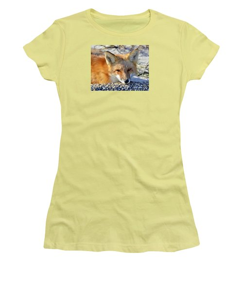 Women's T-Shirt (Junior Cut) featuring the photograph Fox Posing For Me by Sami Martin