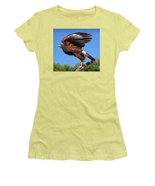 Harris's Hawk Women's T-Shirt (Athletic Fit)