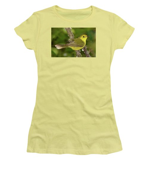 Hooded Warbler Female Women's T-Shirt (Athletic Fit)