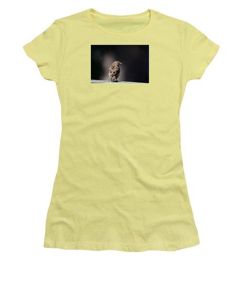 House Sparrow Women's T-Shirt (Junior Cut) by Kathy Eickenberg