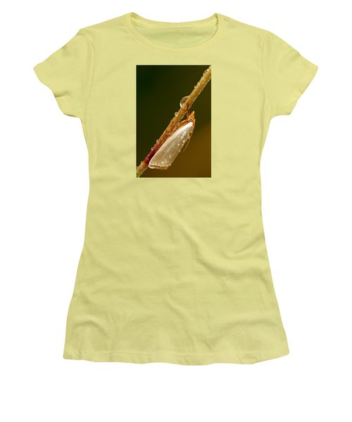 Mother-of-peal Moth Women's T-Shirt (Junior Cut) by Robert Charity