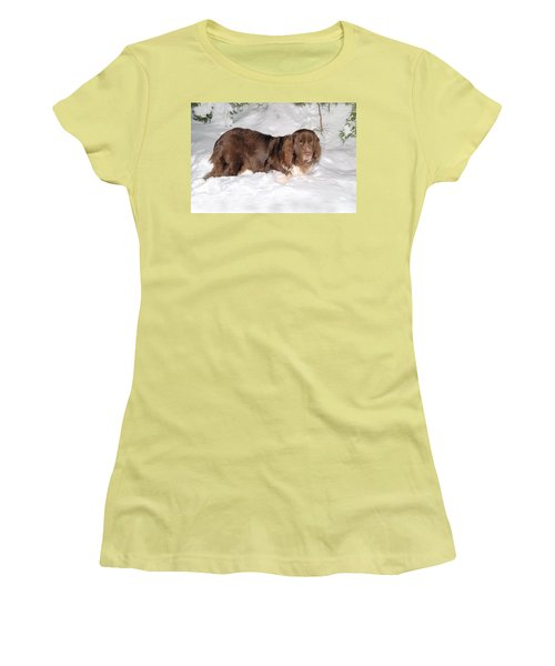 Women's T-Shirt (Athletic Fit) featuring the photograph Newf In Snow by Debbie Stahre