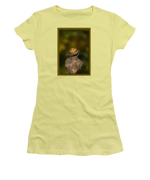 Women's T-Shirt (Junior Cut) featuring the photograph Orange Stink Bug 002 by Kevin Chippindall