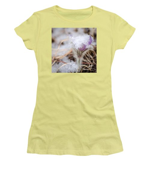 Pasqueflower In The Snow Women's T-Shirt (Athletic Fit)