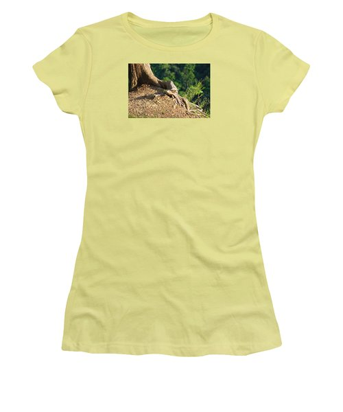 Picture Of A Tree On A Ledge Women's T-Shirt (Athletic Fit)