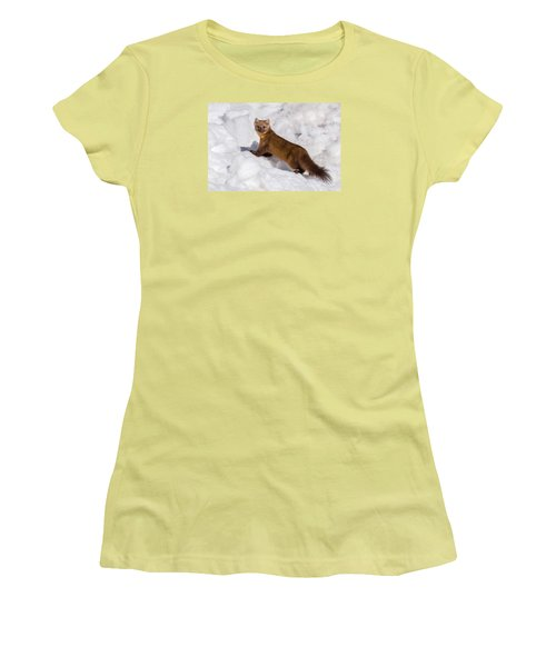 Pine Marten In Snow Women's T-Shirt (Junior Cut) by Yeates Photography