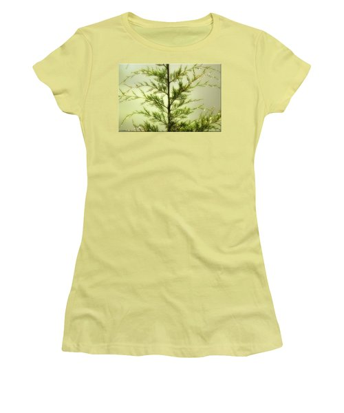 Women's T-Shirt (Junior Cut) featuring the photograph Pine Shower by Brian Wallace