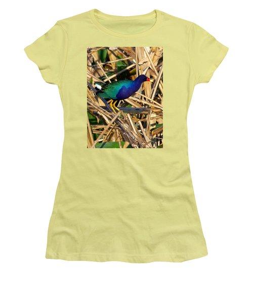 Women's T-Shirt (Junior Cut) featuring the photograph Purple Galinule 003 by Chris Mercer