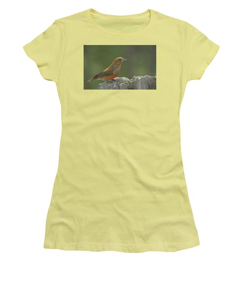 Red Crossbill Women's T-Shirt (Athletic Fit)