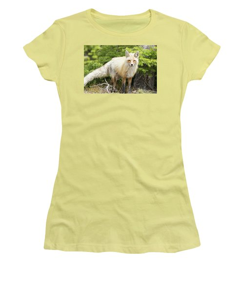 Red Fox Women's T-Shirt (Athletic Fit)