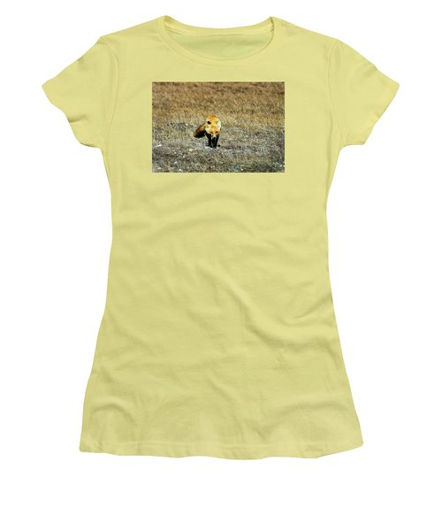 Women's T-Shirt (Junior Cut) featuring the photograph Red Fox On The Tundra by Anthony Jones