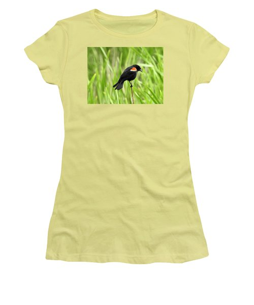 Red-winged Blackbird Women's T-Shirt (Junior Cut) by Brian Chase