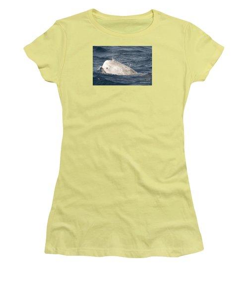 Risso Dolphin Women's T-Shirt (Junior Cut) by Loriannah Hespe