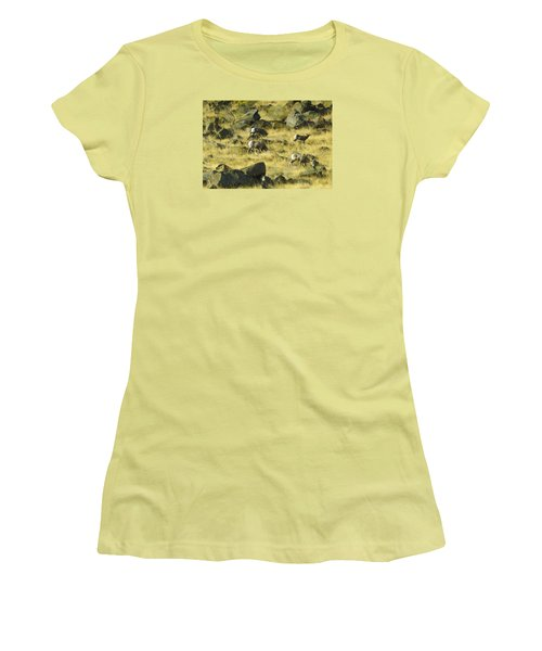Women's T-Shirt (Junior Cut) featuring the photograph Roaming Free by Dale Stillman