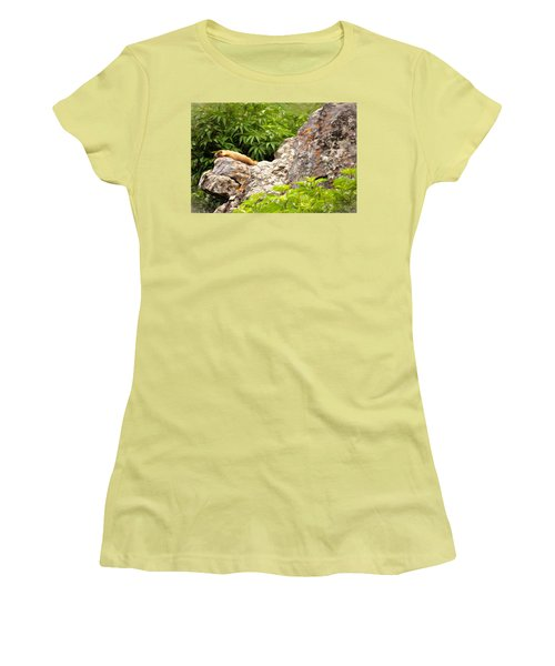 Rock Chuck Women's T-Shirt (Junior Cut) by Lana Trussell