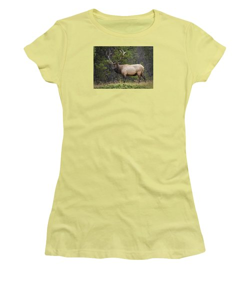 Rocky Mountain National Park Bull Elk Women's T-Shirt (Athletic Fit)