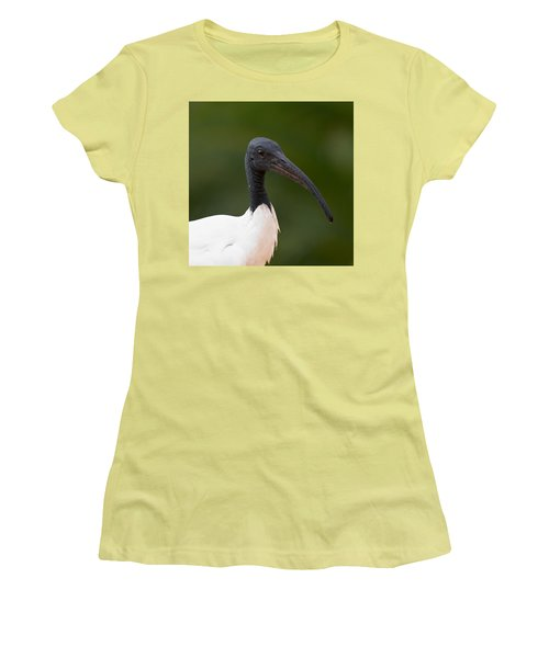 Sacred Ibis Women's T-Shirt (Athletic Fit)