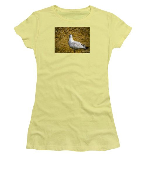 Women's T-Shirt (Junior Cut) featuring the photograph Seagull Family by Melissa Messick