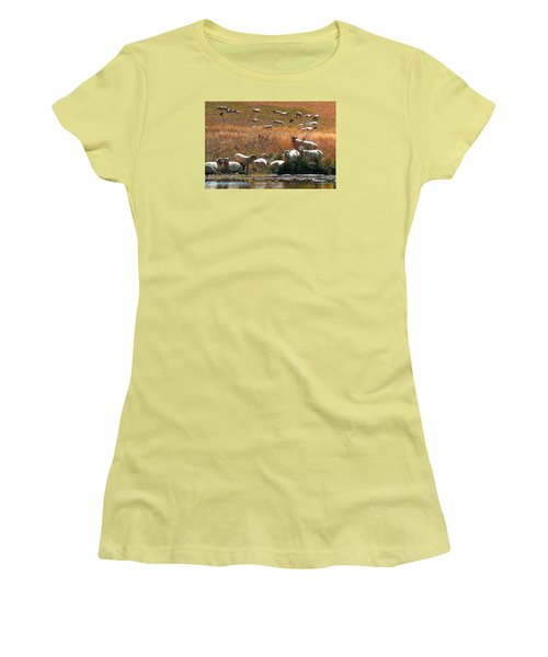 Sheep Country Women's T-Shirt (Athletic Fit)