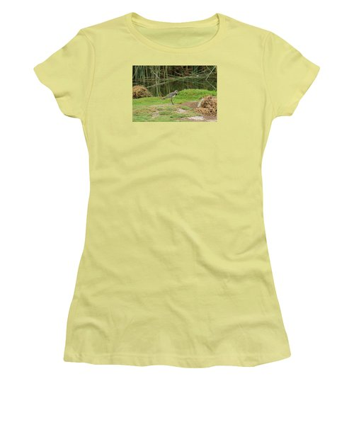 Southern Lapwing On Shore Women's T-Shirt (Junior Cut) by Robert Hamm